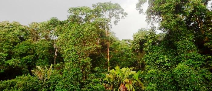 rainforest jungle in costa rica
