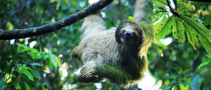 the best places to see animals in costa rica