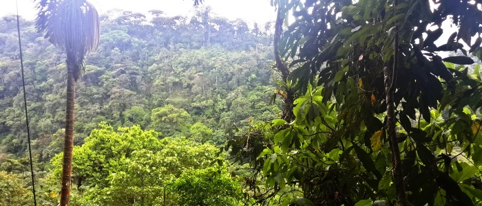 a great tour from san jose to the costa rica rainforest