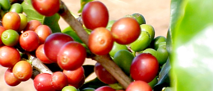 there is a high demand for the costa rican coffee in foreign markets like north america, europe and asia