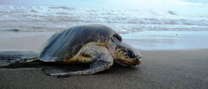 the best place to see turtle nesting and turtle hatching