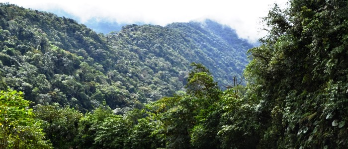 this is the closest rainforest to san jose costa rica