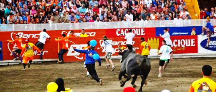 visit the bullfighting show during your trip to costa rica