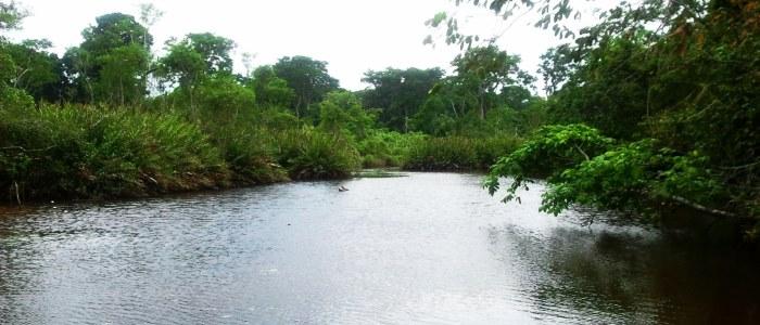 best rainforest tours in costa rica