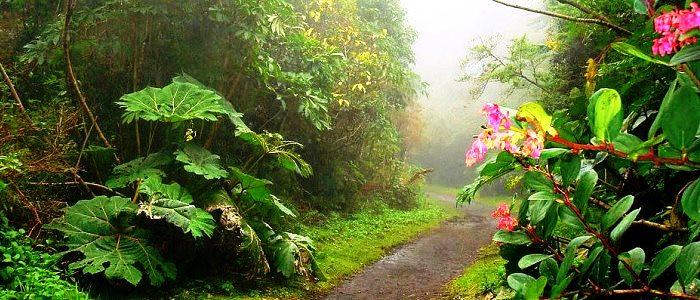 beautiful cloud forest location in costa rica