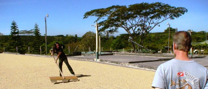 enjoy the best coffee tour in costa rica
