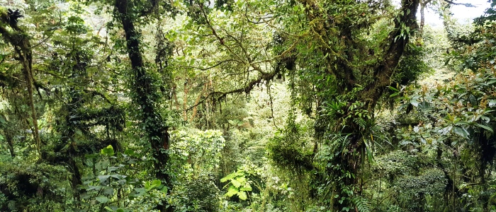 make sure to visit the monteverde cloud forest during your vacation in costa rica