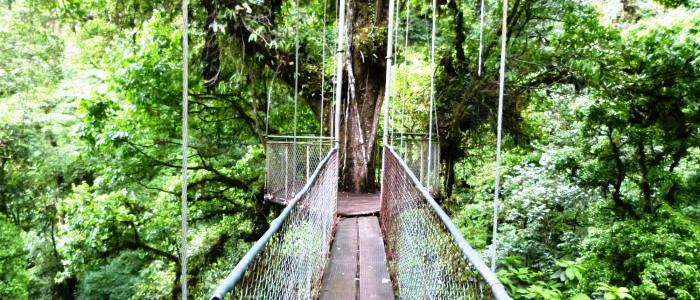 go to the guanacaste hanging bridges on your costa rica family vacation