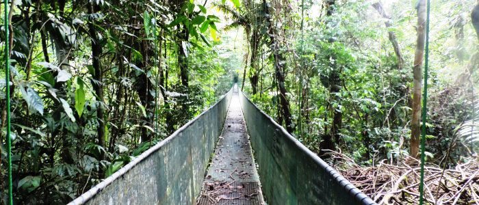 easy to hike trails in the sarapiqui rainforest