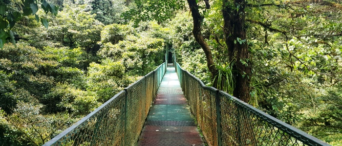 make sure to visit monteverde cloud forest on your costa rica family vacation