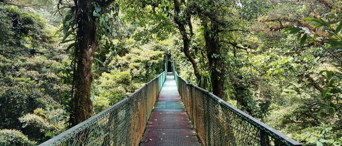 visit the monteverde hanging bridges during your trip to costa rica