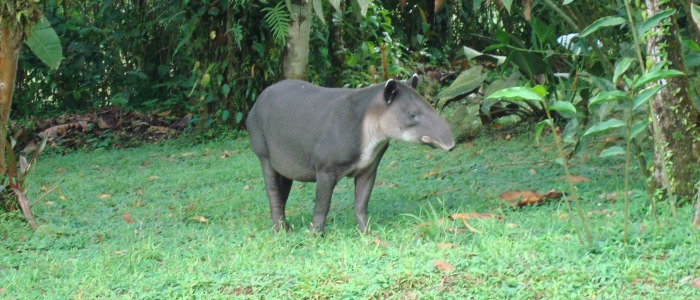 beautiful costa rica wildlife observed on many tours from san jose and guanacaste