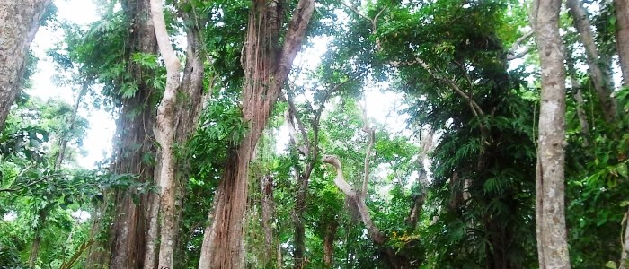 the most lush-exuberant vegetation in all costa rica