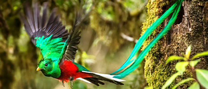 beautiful birds that can be found in the costa rica cloud forest