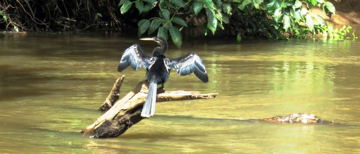 travelling to costa rica give you great chances of seeing wildlife
