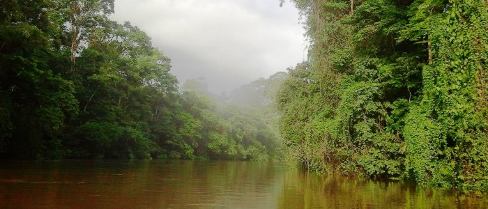 the tortuguero national park is the best rainforest tour in costa rica