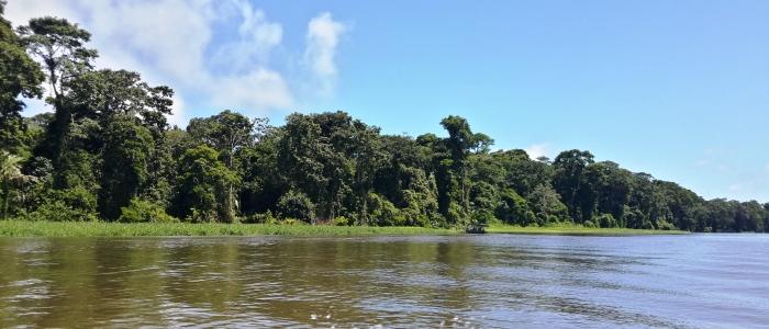 tortuguero national park tour in the limon province