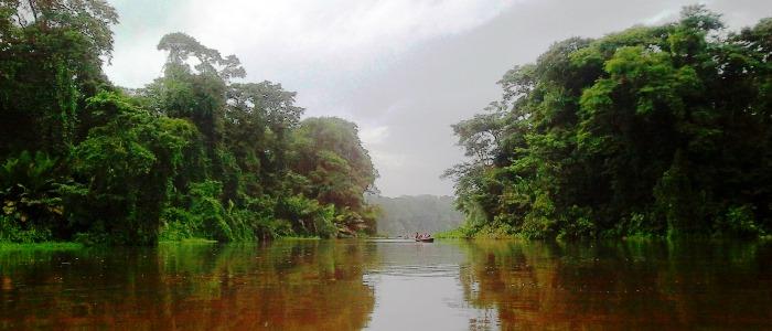 beautiful tortuguero national park