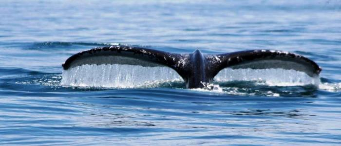 best spot for the observation of whales in costa rica