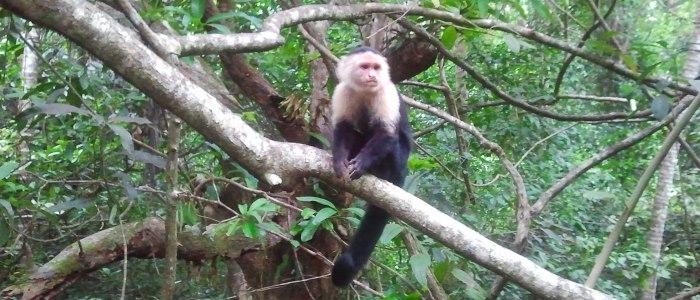 beautiful nature in the costa rica rainforest