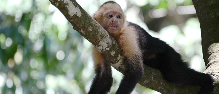 costa-rica-wildlife-in-the-rainforest